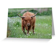 Highland Cattle bull grazing out in a daisy-filled meadow. Greeting Card