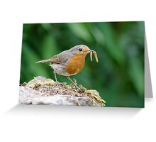 European Robin (Erithacus rubecula) with a mouthful of mealworms. Greeting Card