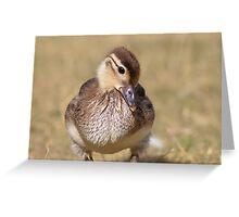 Portrait of a Mallard Duckling (Anas platyrhynchos) Greeting Card