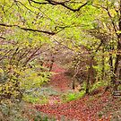 """ The Leafy Stroll "" by Richard Couchman"
