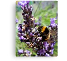 Lavender and the Bee Canvas Print