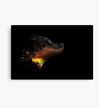 staffie deep in thought Canvas Print
