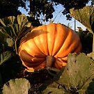 Pumpkin calling . . . .  by evon ski