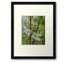 New born dragonfly Framed Print