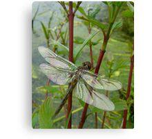 New born dragonfly Canvas Print