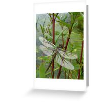 New born dragonfly Greeting Card
