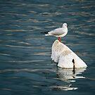 Floated by Katayoonphotos