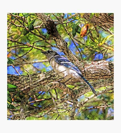 Spring Blue Jay  Photographic Print