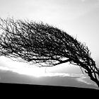 Where the wind blows by mikebov