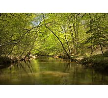Spring along Moccasin Creek  Photographic Print