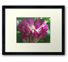 Ghosts in the Clover Framed Print