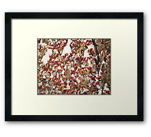 Apple apples  under the snow Framed Print
