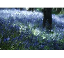 Softly Through The Bluebells Photographic Print