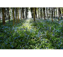 Bluebell Glimmer Photographic Print