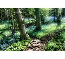 Bluebell Hill Photographic Print