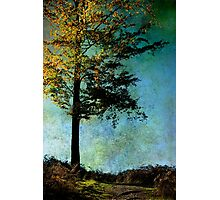 One Tree Photographic Print