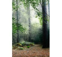 Faerie Forest Photographic Print