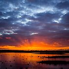 Martinmere - Wetlands - A View  by Carl Gaynor