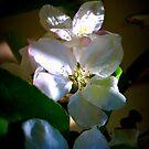 Sunlit Blossoms by Lozzar Flowers & Art