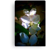 Sunlit Blossoms Canvas Print