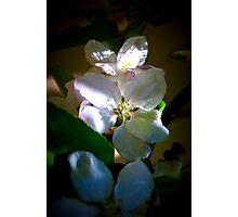 Sunlit Blossoms Photographic Print