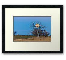 Mega Beaver Moon  Framed Print