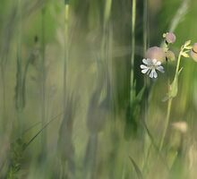 Wild flowers by Jeannine St-Amour