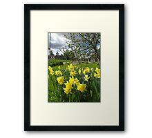 Daffodils and Dandelions Framed Print