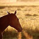 14.9.2014: Horse and Breath by Petri Volanen