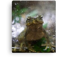 A Frog Day Canvas Print