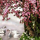 Spring Swans by littlecritters
