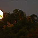 Super Jungle Moon by Chet  King