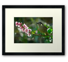 Signs of Spring... Framed Print