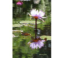Water Lily Mirrored in the Pond Photographic Print