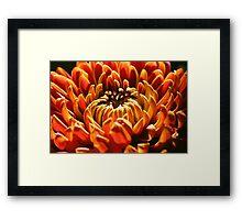 Autumn Bloom Framed Print