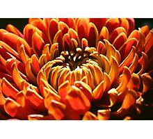Autumn Bloom Photographic Print