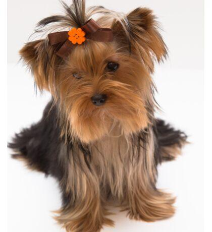 Sweet Yorkie Puppy Sticker