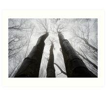 Trees reaching up Art Print