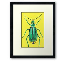 Green insect drawing Framed Print