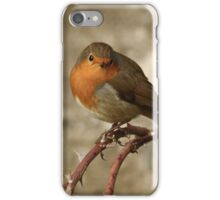 Robin On Thorny Stem iPhone Case/Skin
