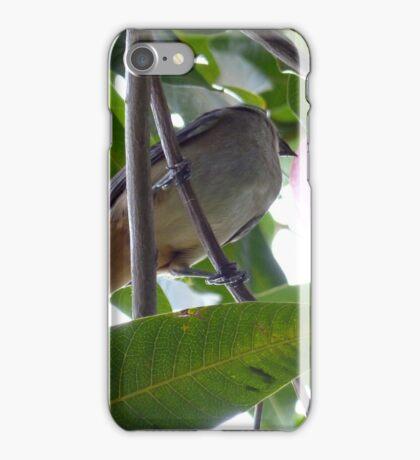 Bird Eating Mango iPhone Case/Skin