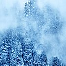 Winter Trees by Svetlana Sewell