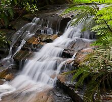 Leura Cascades by Chris  Randall