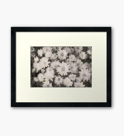 Vintage Dreamy White Flowers Framed Print