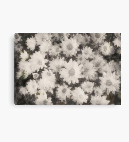 Vintage Dreamy White Flowers Canvas Print