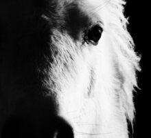 Blue Belle the Mini Shetland Pony (Black & White) Sticker