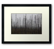 Death spruce trees  Framed Print
