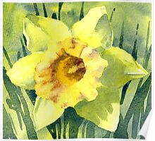 Yellow Daffodil Flower - Watercolours Poster