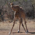 Awkward Giraffe by Sauropod8