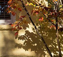 Washington, DC Facades - Dupont Circle Neighborhood - Playing with Shadows by Georgia Mizuleva